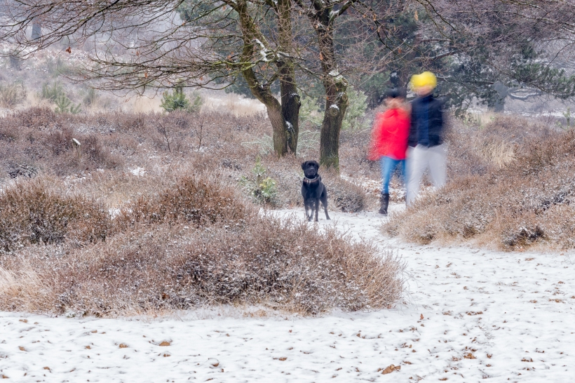 winter_posbank_11